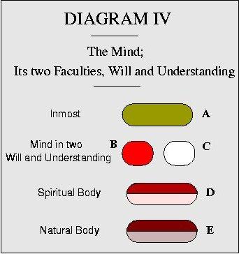 Anatomy Of The Mind